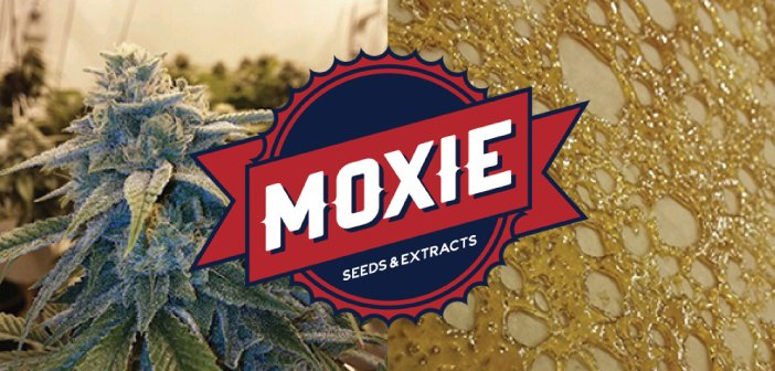 Moxie Seeds & Extracts Logo