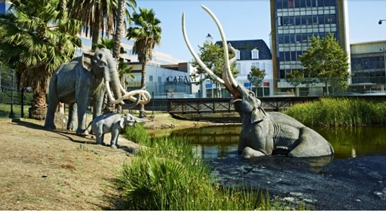 La Brea Tar Pits for California weed vacation