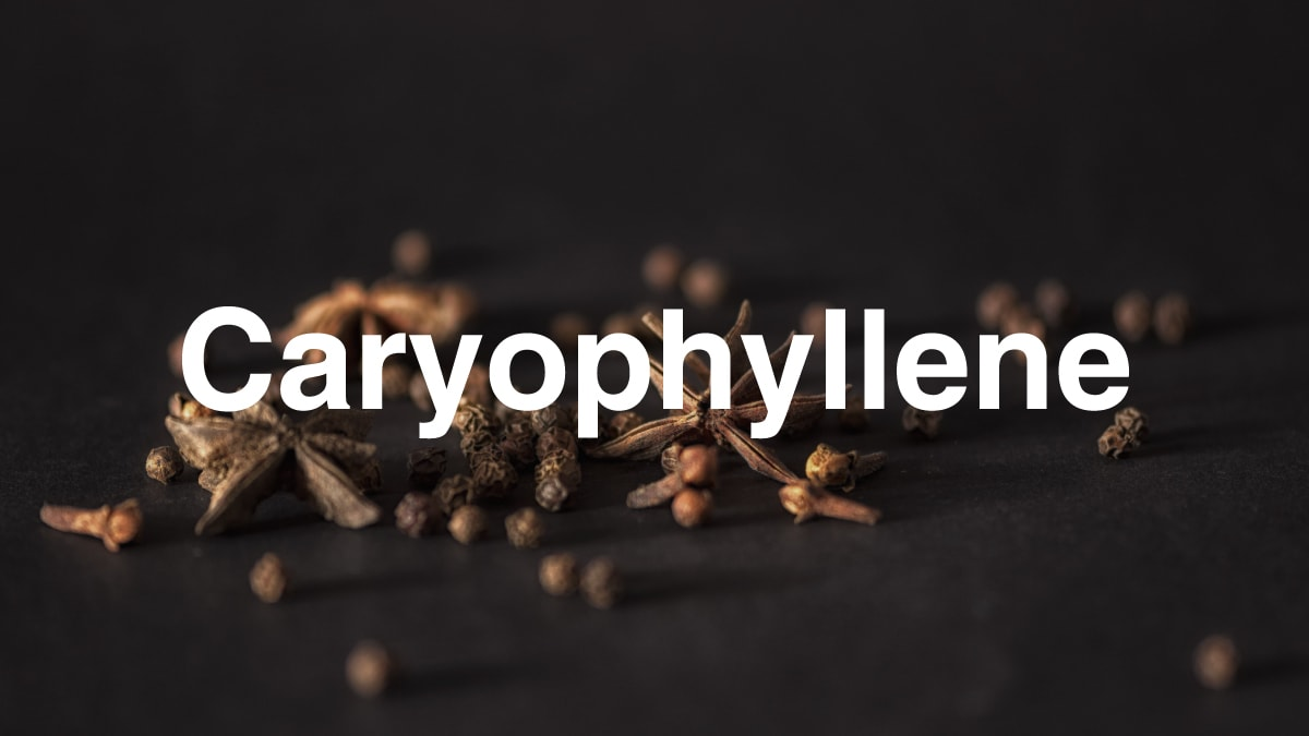 Caryophyllene terpene high note