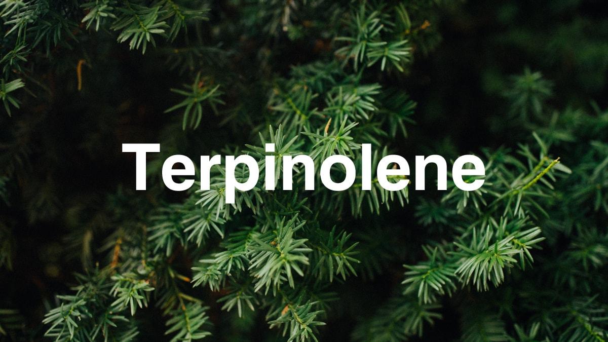 Terpinolene Terpene