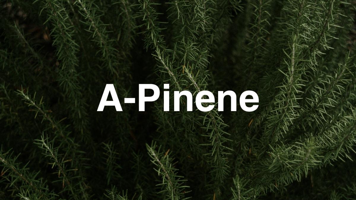 A-Pinene Terpene