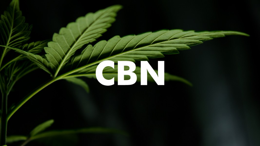 CBN minor cannabinoid
