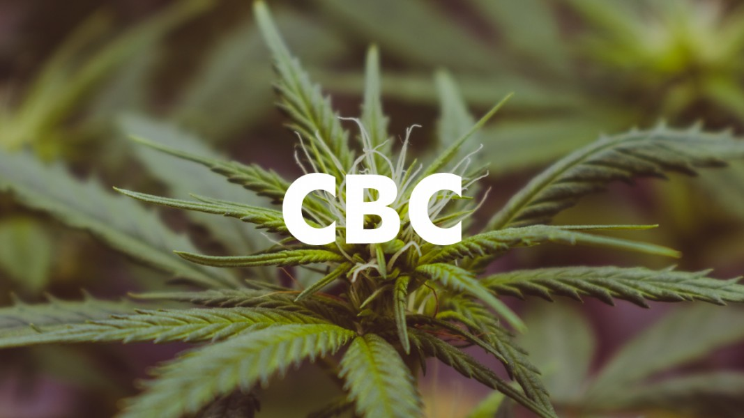 CBC minor cannabinoid