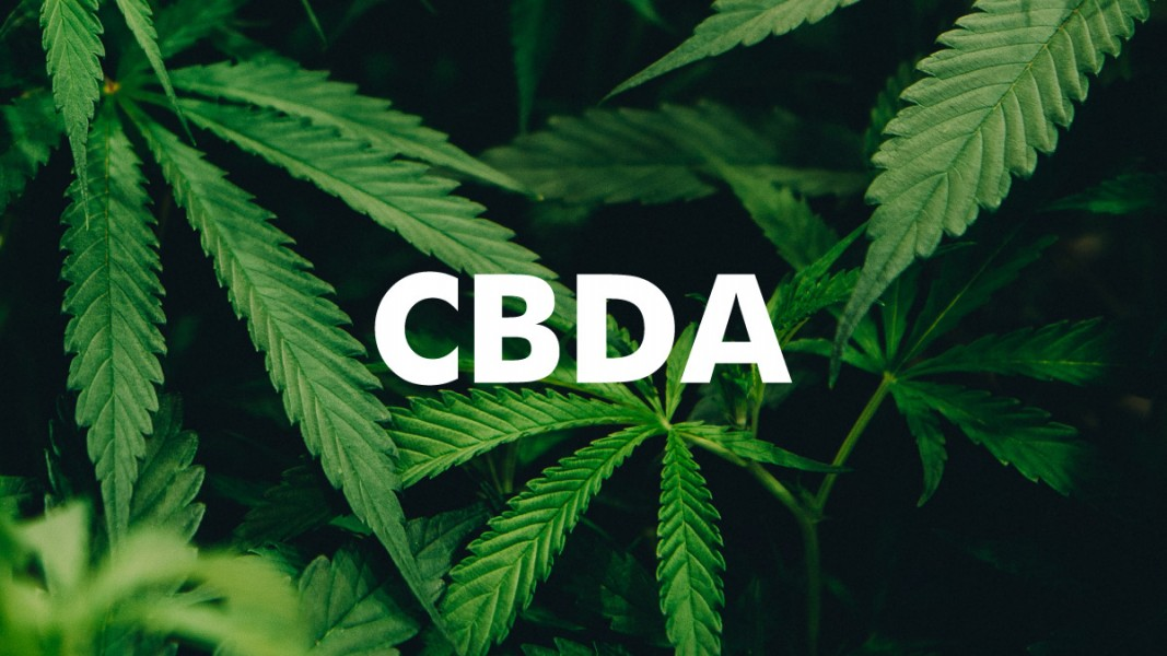 CBDA minor cannabinoid