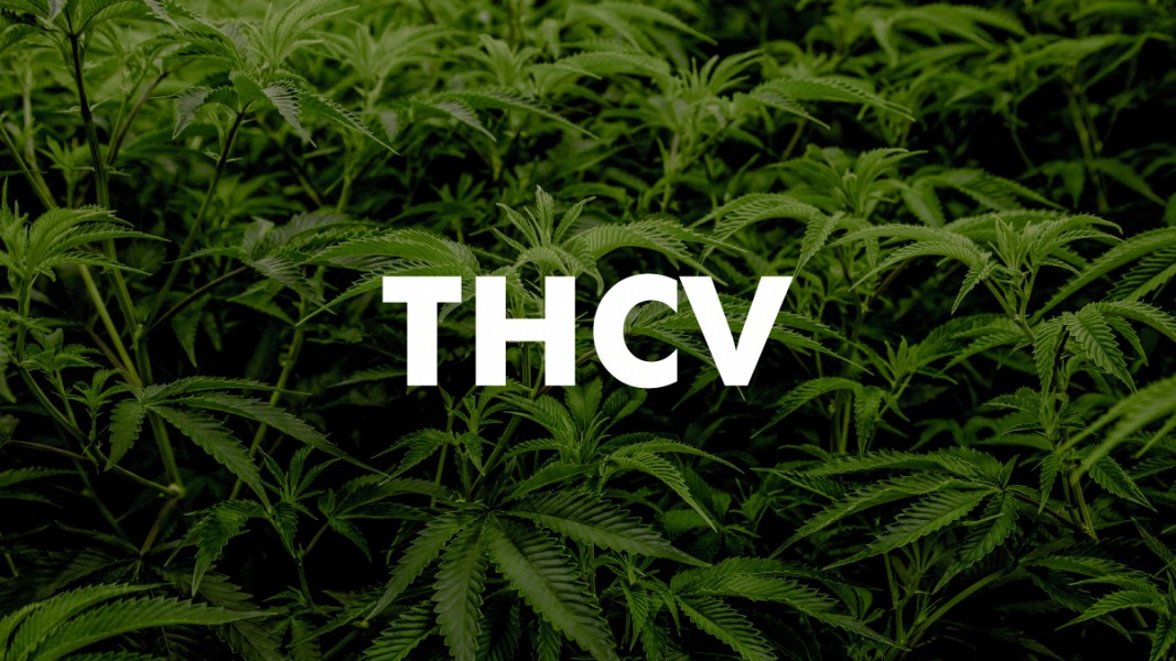 THCV minor cannabinoid