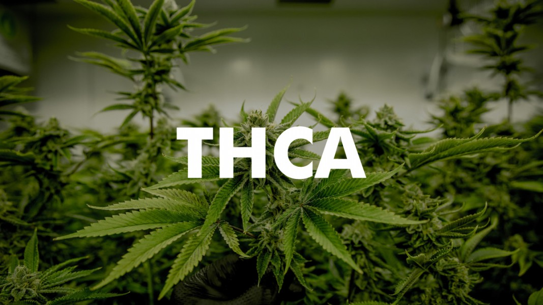 THCA minor cannabinoid