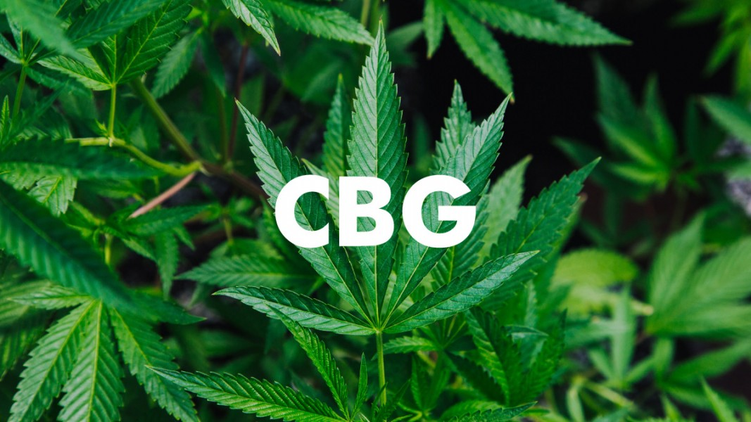 CBG minor cannabinoid