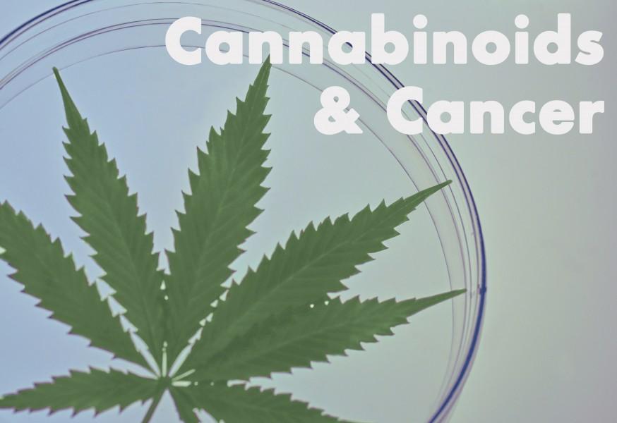 Cannabinoids for cancer treatment marijuana weed