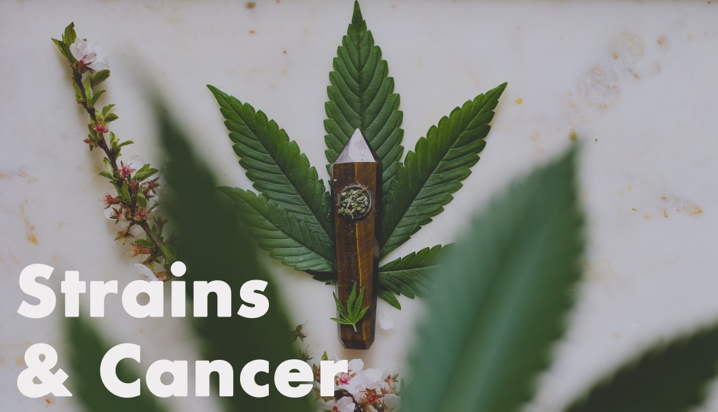 Cannabis flower strains for cancer treatment